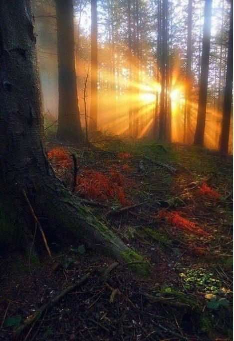 Sun Ray Forest, France
