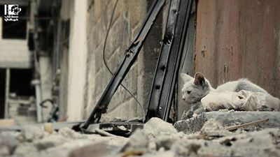 I am sitting alone waiting for them to return  Homs-Syria.