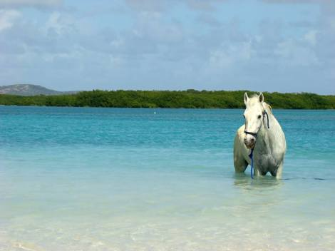 Have you ever ridden a Horse at sea?