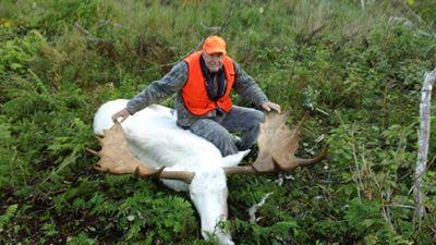 hunters shot a rare albino moose last week.