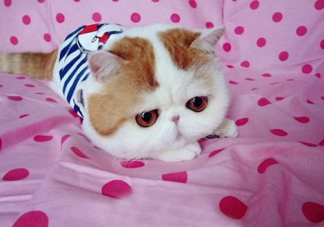Is Snoopybabe the cutest cat on the internet?